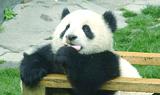格安!中国留学方法!本場で中国語習得!